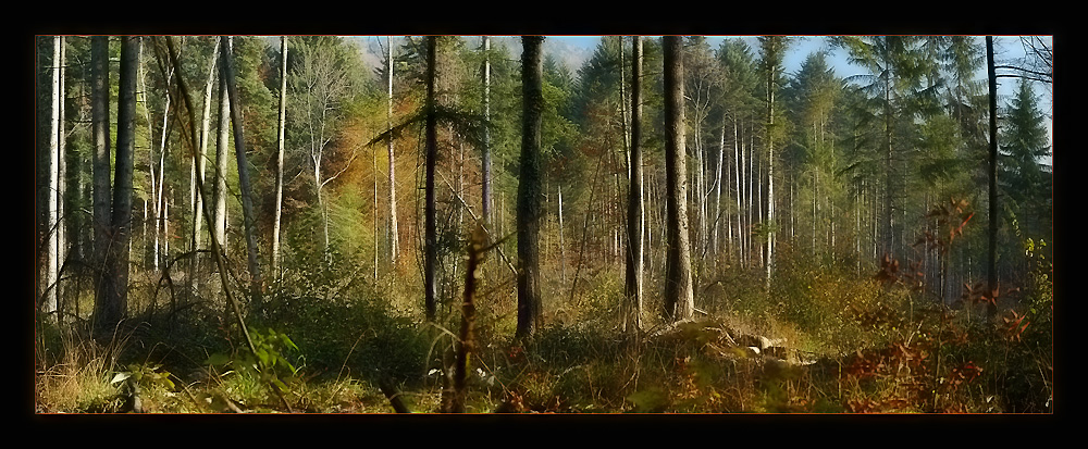 "photo ""Fairy Tales"" tags: panoramic, landscape, forest"