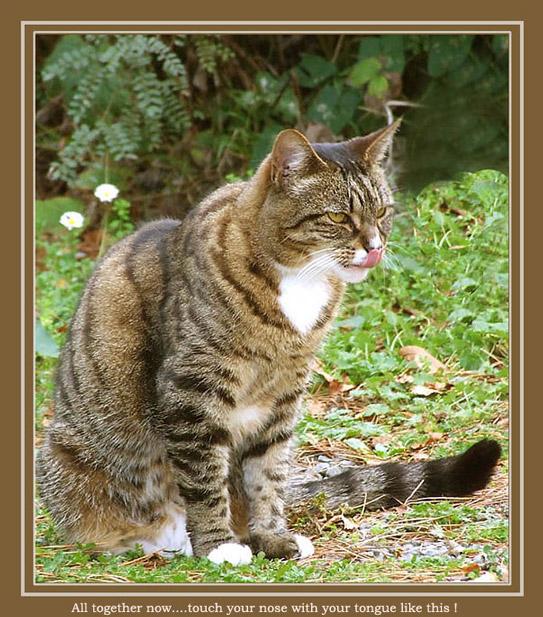 "photo ""Cat School"" tags: nature, pets/farm animals"