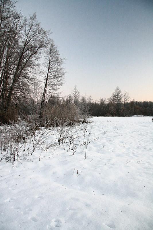 """фото """"Зимнее утро"""" метки: пейзаж, зима"""