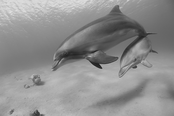 "photo ""Mother and Son"" tags: underwater,"