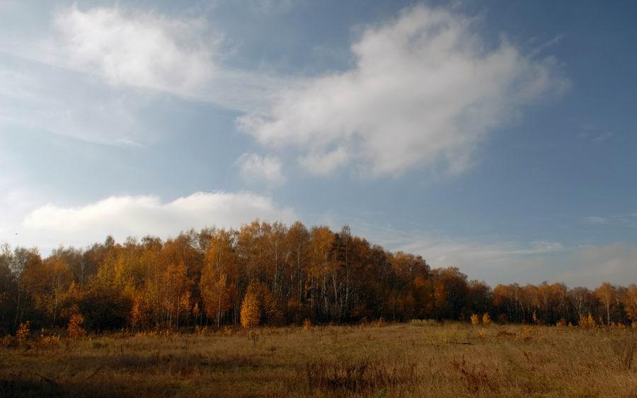 """фото """"В багрец и золото одетые леса…"""" метки: пейзаж, осень"""