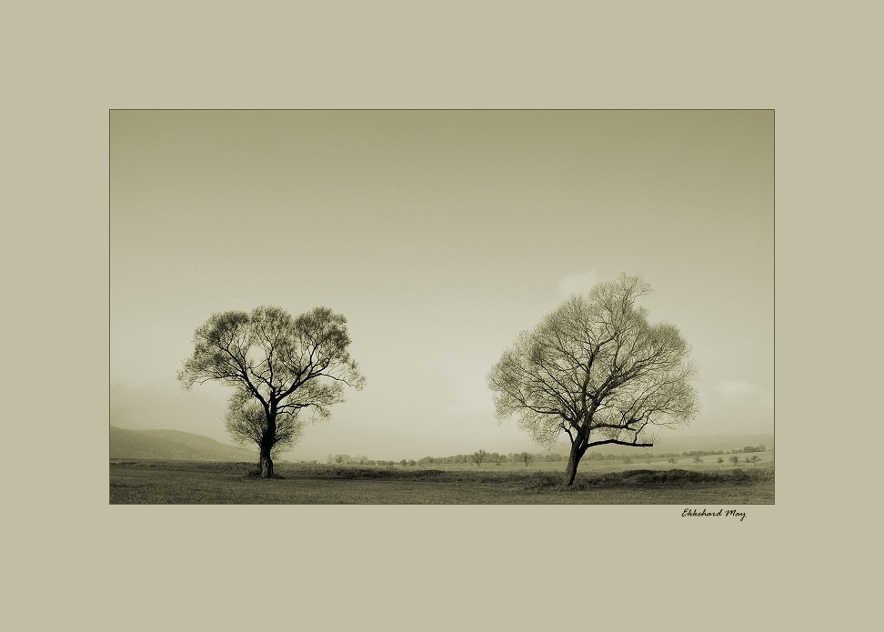 "photo ""two trees"" tags: landscape, autumn"