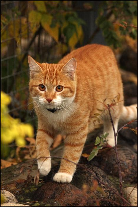 "photo ""Hunter"" tags: nature, pets/farm animals"
