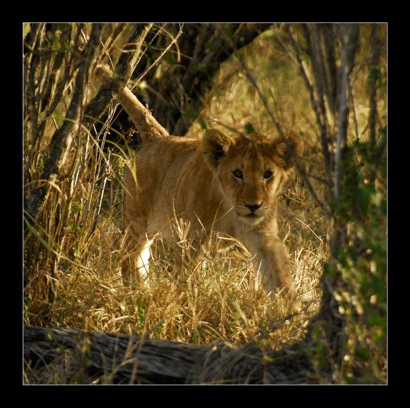 """фото """"Первая охота"""" метки: природа, дикие животные"""