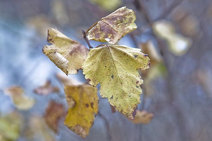 """фото """"Рельеф"""" метки: пейзаж, фрагмент, осень"""