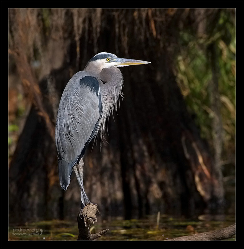 "photo ""Cold Heron"" tags: nature, travel, North America, wild animals"