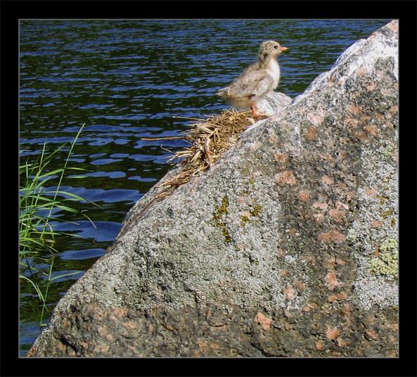 "photo ""live diagonally"" tags: nature, wild animals"