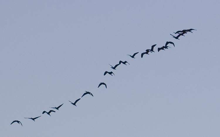 "photo ""Nature Squadron"" tags: nature, wild animals"