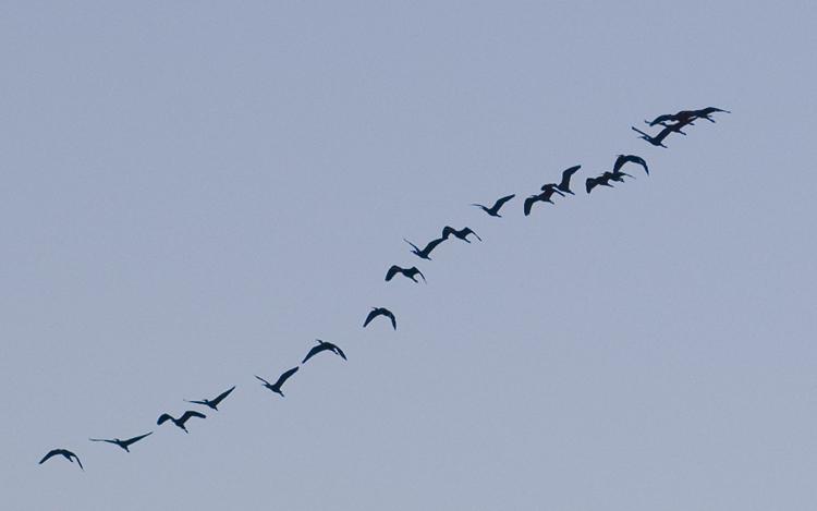 "фото ""Nature Squadron"" метки: природа, дикие животные"