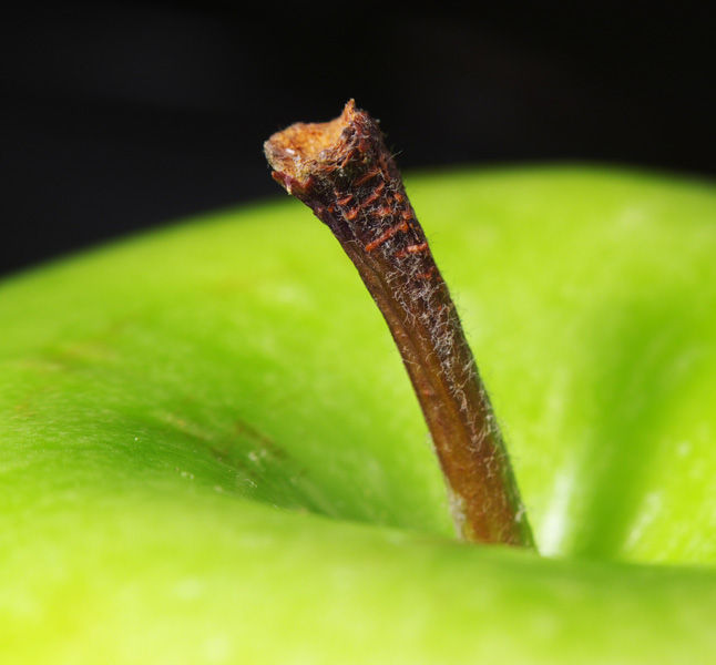 "photo ""apple"" tags: macro and close-up,"