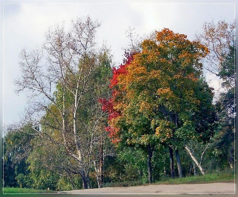 """фото """"Осенний Порыв"""" метки: пейзаж, осень"""