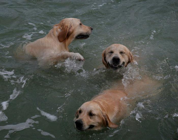 "фото ""Веселое трио"" метки: природа, жанр, домашние животные"