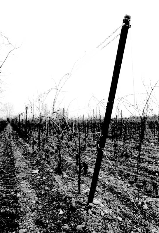 "photo ""Vigne"" tags: black&white, landscape,"