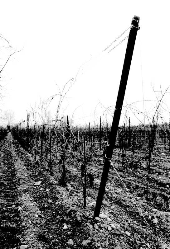 """photo """"Vigne"""" tags: black&white, landscape,"""
