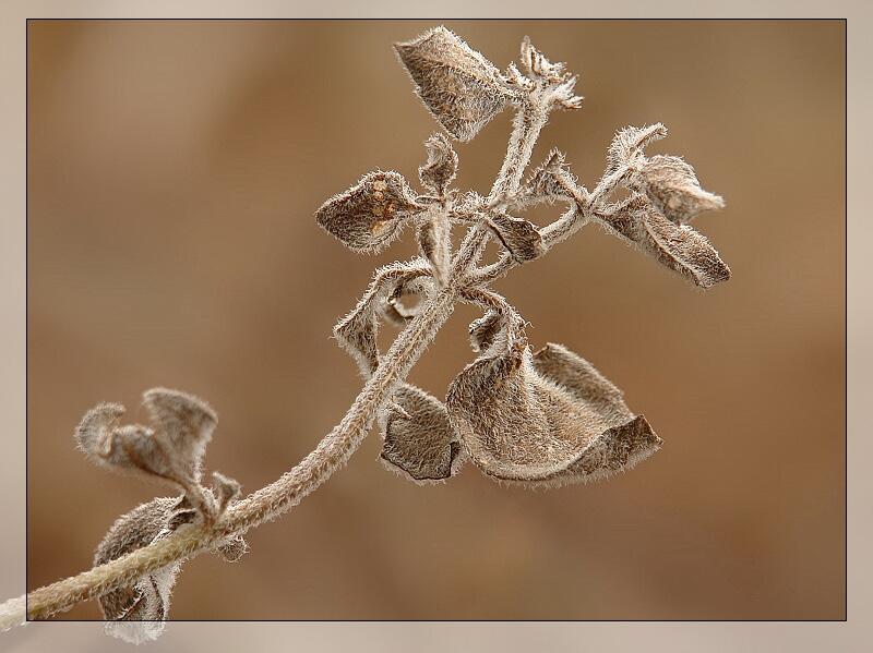 """фото """"Осенняя..."""" метки: макро и крупный план,"""