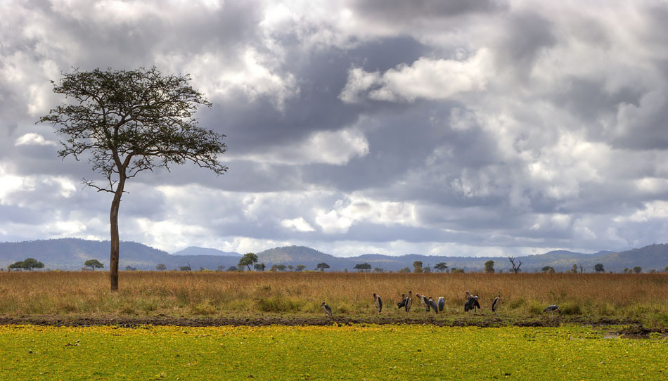 "photo ""African landscape with birds"" tags: landscape, travel, Africa"