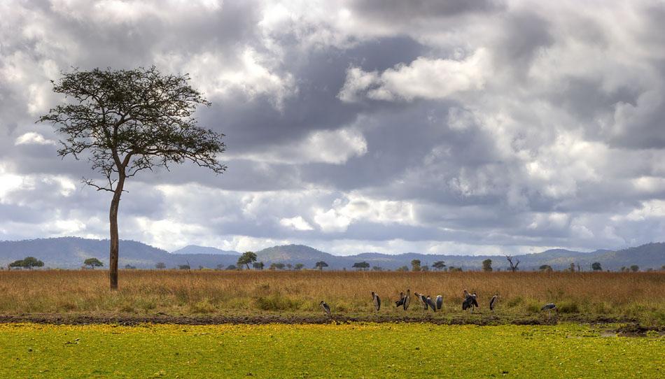 """фото """"Африканский пейзаж с птицами"""" метки: пейзаж, путешествия, Африка"""