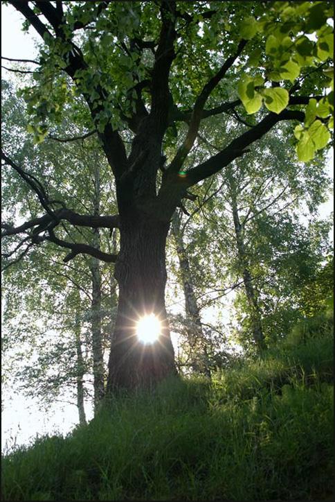 "photo ""Light."" tags: misc., landscape,"