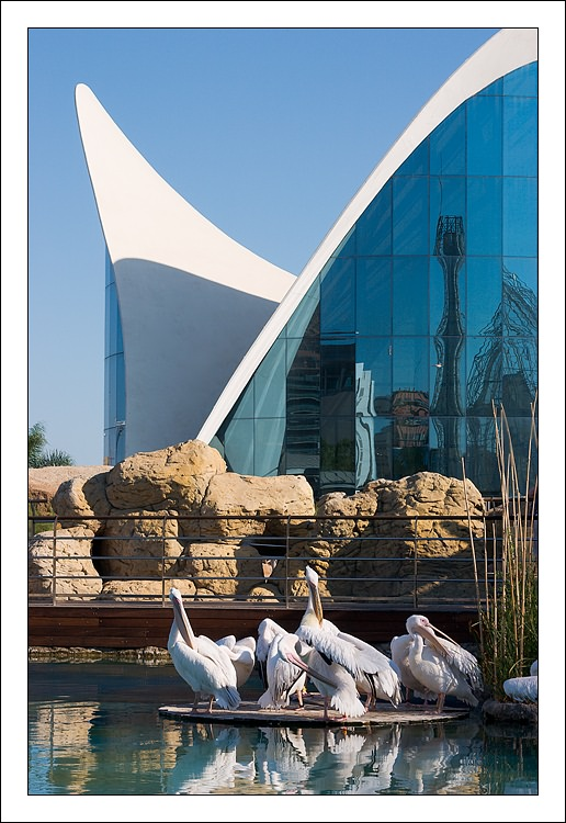 "photo ""Pelicans"" tags: nature, architecture, landscape, wild animals"