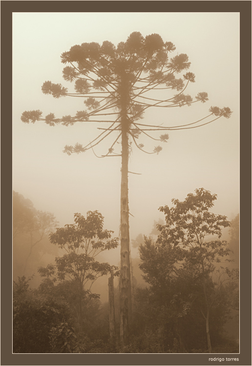 "фото ""the big one"" метки: пейзаж, природа, лес"