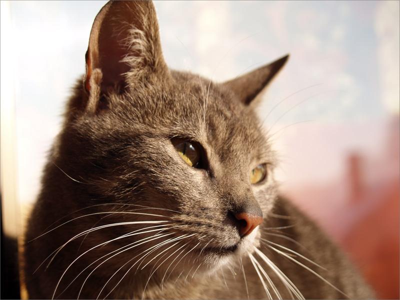 """фото """"Zakopane Cat"""" метки: ,"""