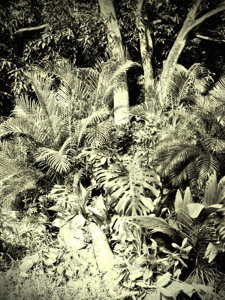 """фото """"Life"""" метки: пейзаж, природа, лес"""