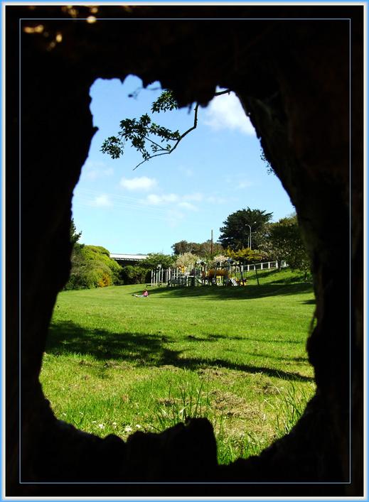 "фото ""Tree Hole"" метки: натюрморт,"
