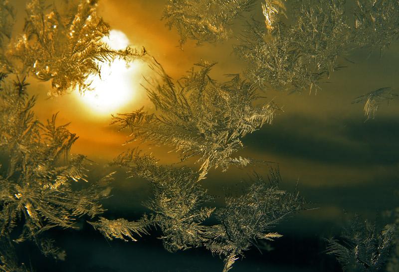 """фото """"мороз и солнце"""" метки: макро и крупный план,"""