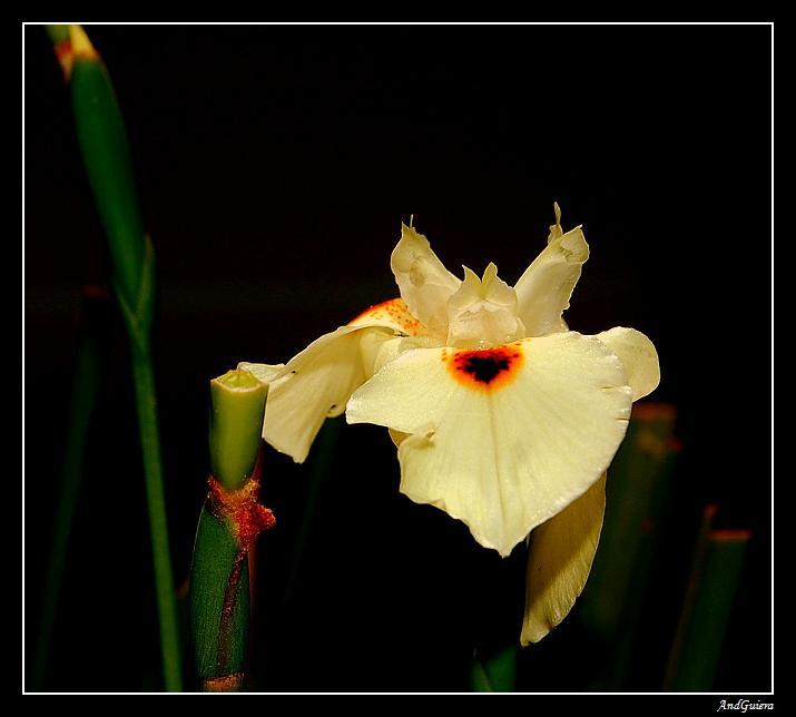 """фото """"****"""" метки: природа, макро и крупный план, цветы"""
