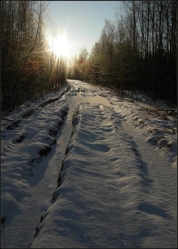 "фото ""Солнечная дорога."" метки: пейзаж, лес"