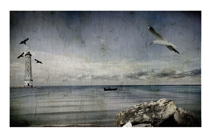 "фото ""seagull dream"" метки: пейзаж, вода"