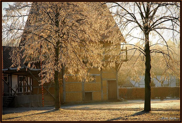 "photo ""sunny winter day"" tags: landscape, nature, flowers, winter"