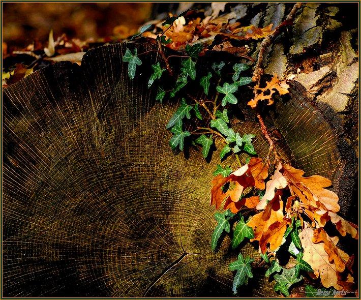 """фото """"still life"""" метки: природа, макро и крупный план, цветы"""