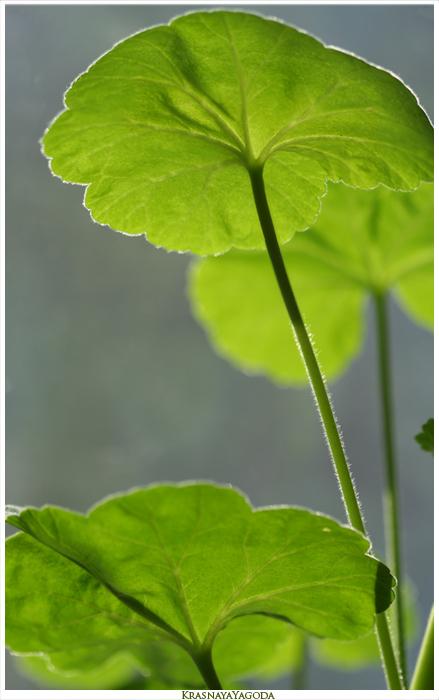 """фото """"Хорошее настроение."""" метки: природа, цветы"""