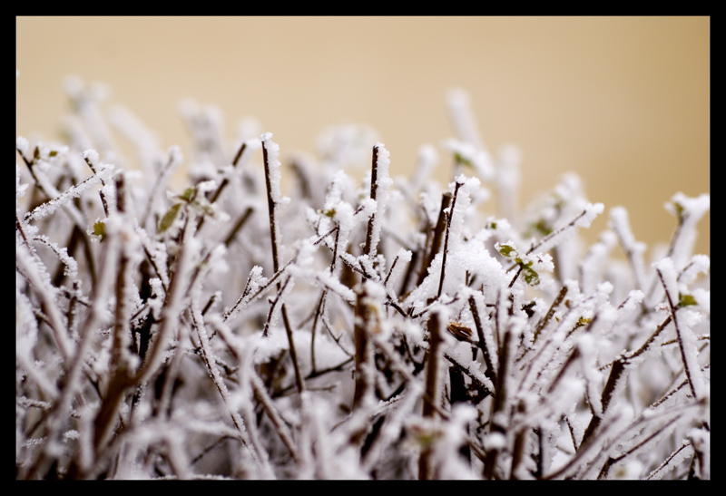 "photo ""Frosen"" tags: macro and close-up,"