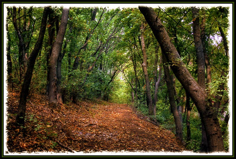 "фото ""Сказочный лес"" метки: пейзаж, лес, лето"