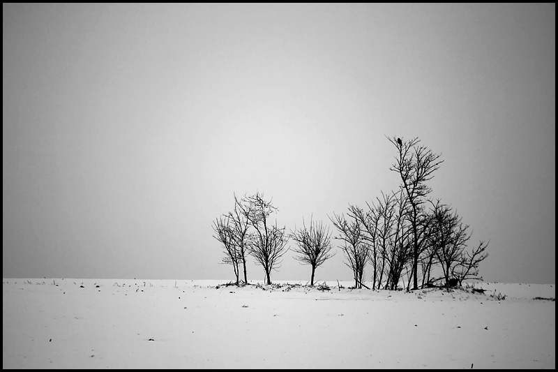 "photo ""Wintertime"" tags: landscape, black&white, winter"