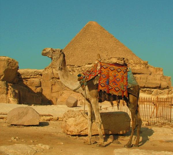 """фото """"Египет. Былое величие."""" метки: путешествия, природа, Африка, домашние животные"""