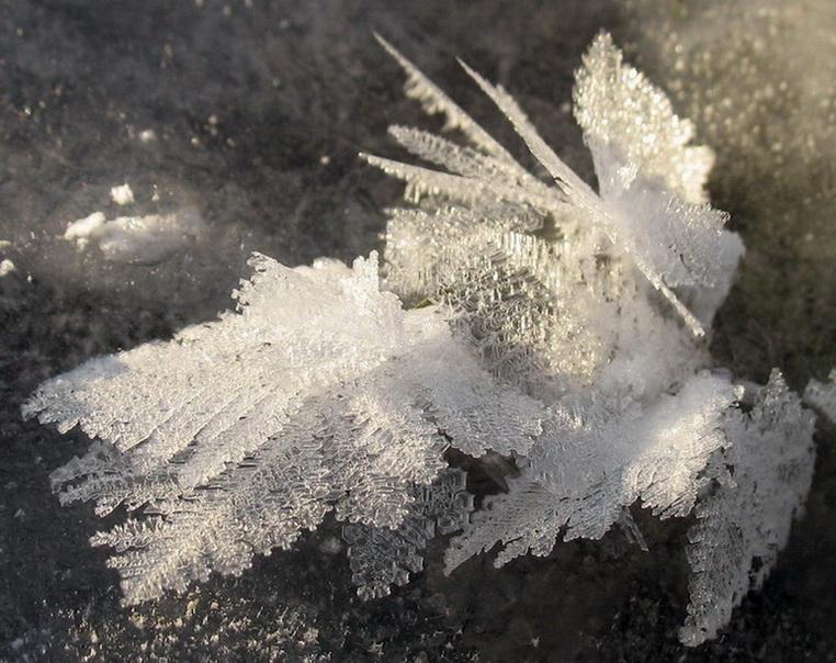 """фото """"SnowDrawing"""" метки: макро и крупный план,"""