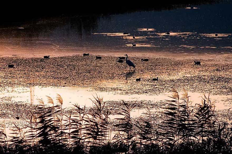 """фото """"****"""" метки: природа, пейзаж, вода, дикие животные"""