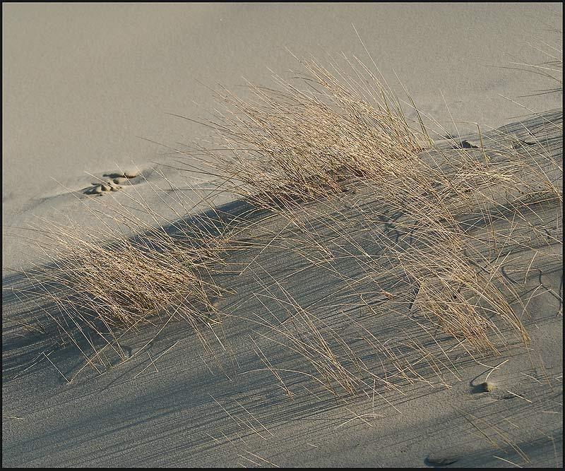 """фото """"сколько той жизни ....."""" метки: пейзаж,"""