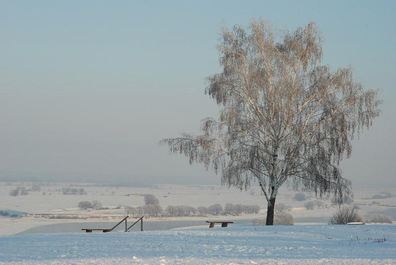 """фото """"Березка"""" метки: пейзаж, зима"""