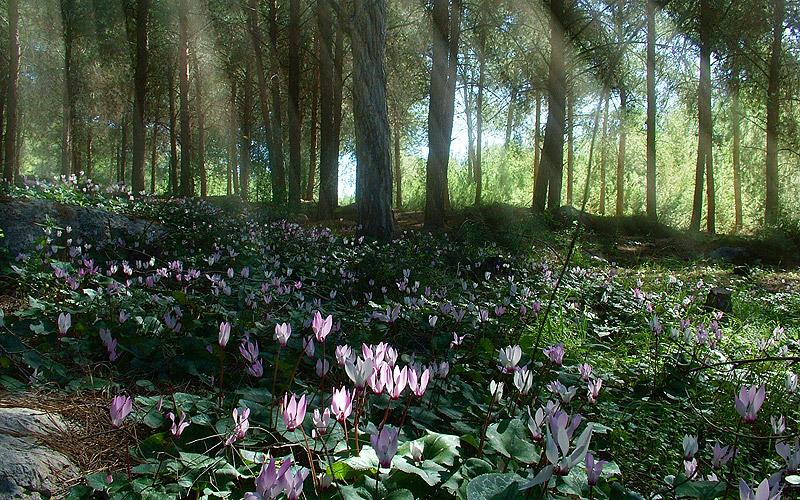 """фото """"Spring Spirit"""" метки: пейзаж, природа, лес, цветы"""