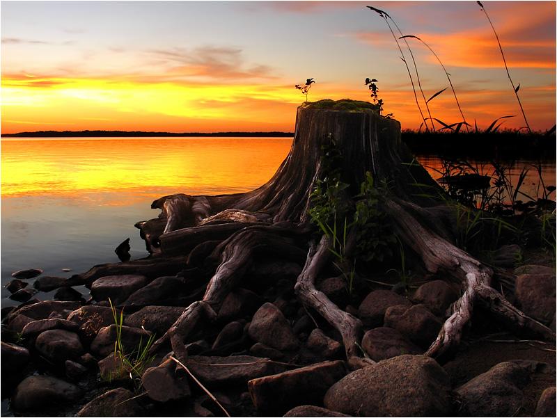 """фото """"Пень"""" метки: пейзаж, закат"""