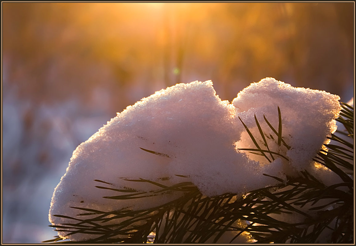 "photo ""To wrap in cold..."" tags: nature, landscape, winter"