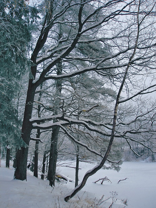 "фото ""Графика безмолвия (4)"" метки: пейзаж, зима, осень"