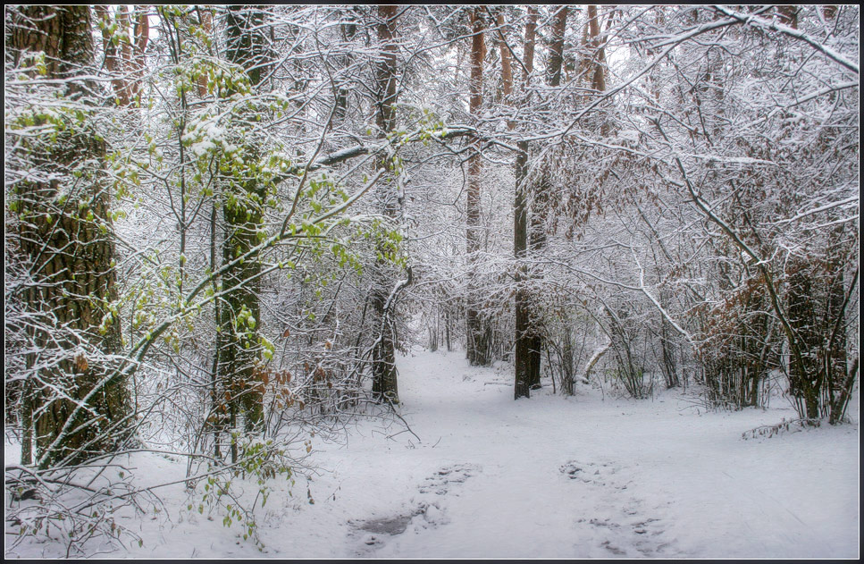 "photo ""First snow"" tags: landscape, forest, winter"