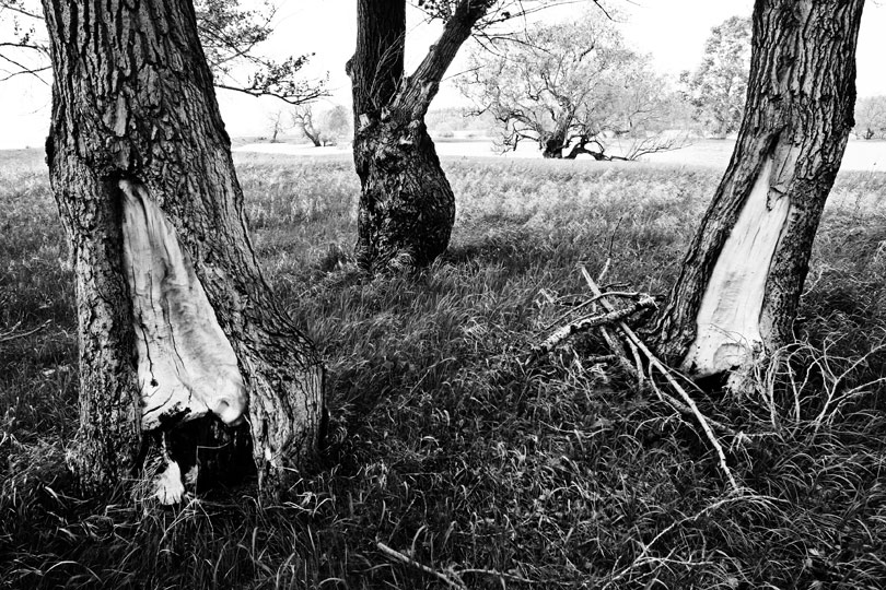 "фото ""Ню"" метки: пейзаж, черно-белые, весна"