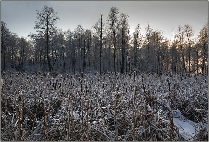 "photo ""Winter bog"" tags: landscape, winter"