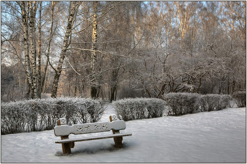 "photo ""Early morning in park"" tags: landscape, forest, winter"